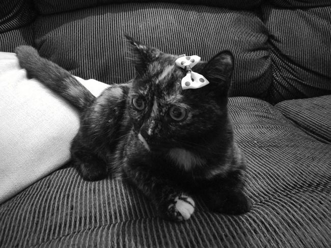 Opal Blackandwhite Pets Black And White Friday