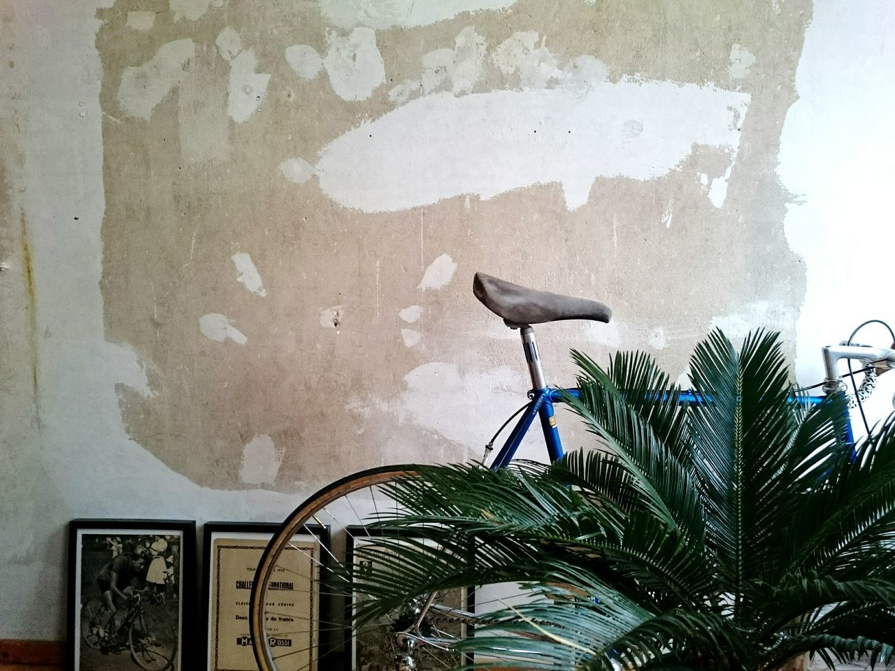 Wall - Building Feature Palm Tree Plant No People Apartment Bicycle Frames Living Living Room