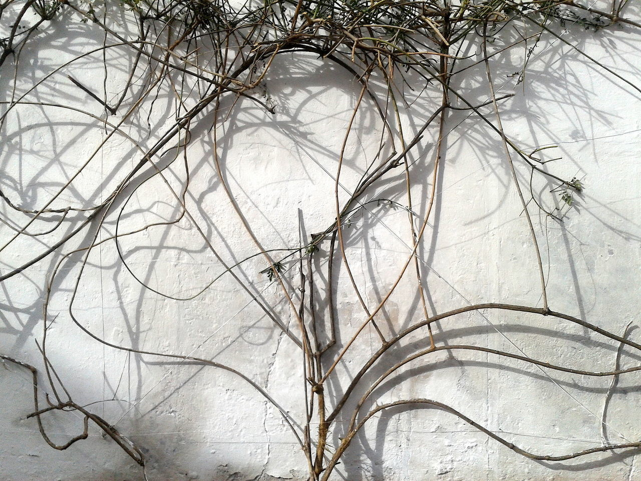 tree, bare tree, branch, no people, backgrounds, marble, winter, nature, snow, close-up, day, beauty in nature, indoors