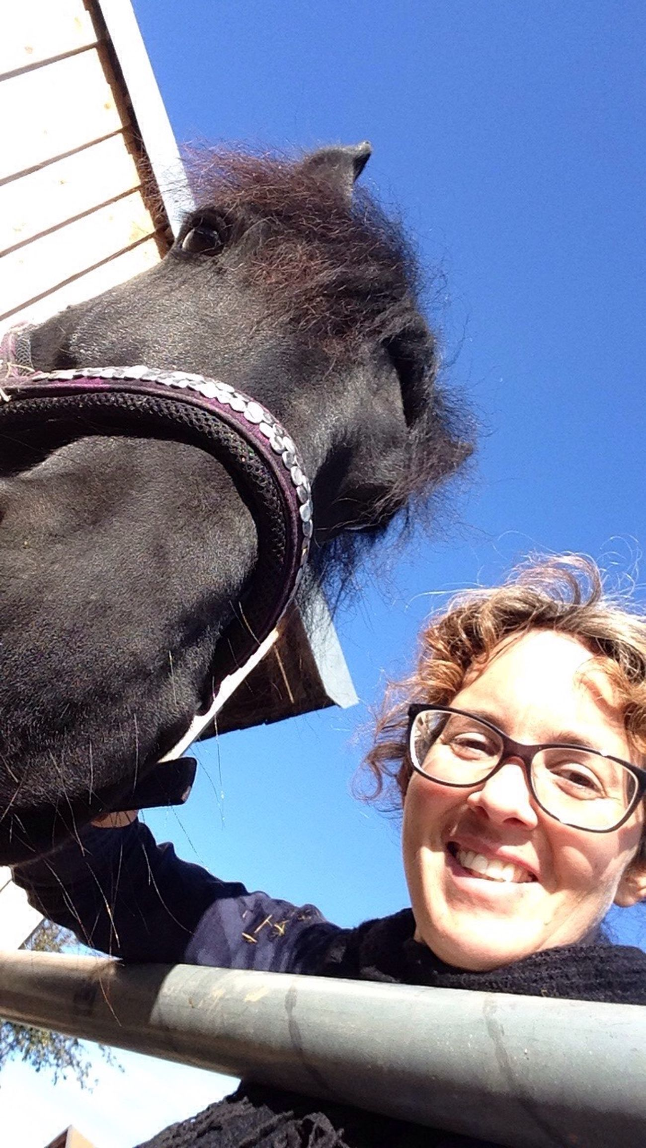 Lilli💝 Friesen Horse I Love Horses Horses I Love My Horse Black Horse IPhoneography Lifestyles Domestic Animals Two People Real People Day One Animal Animal Themes Clear Sky Outdoors Mammal Happiness Close-up Portrait Sky Architecture Funny