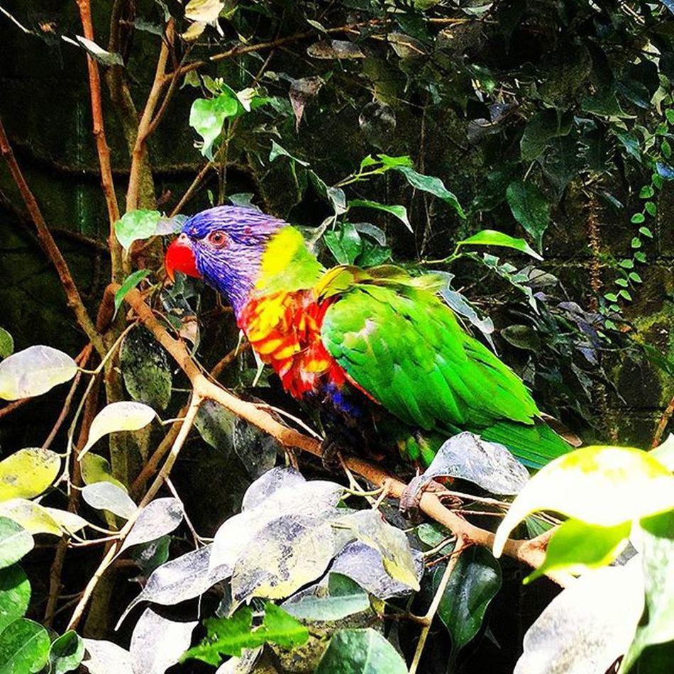 Visita al Butterflypark de Empuriabrava Animal Animals Birds Bird Photography Colors Birds_collection Bird
