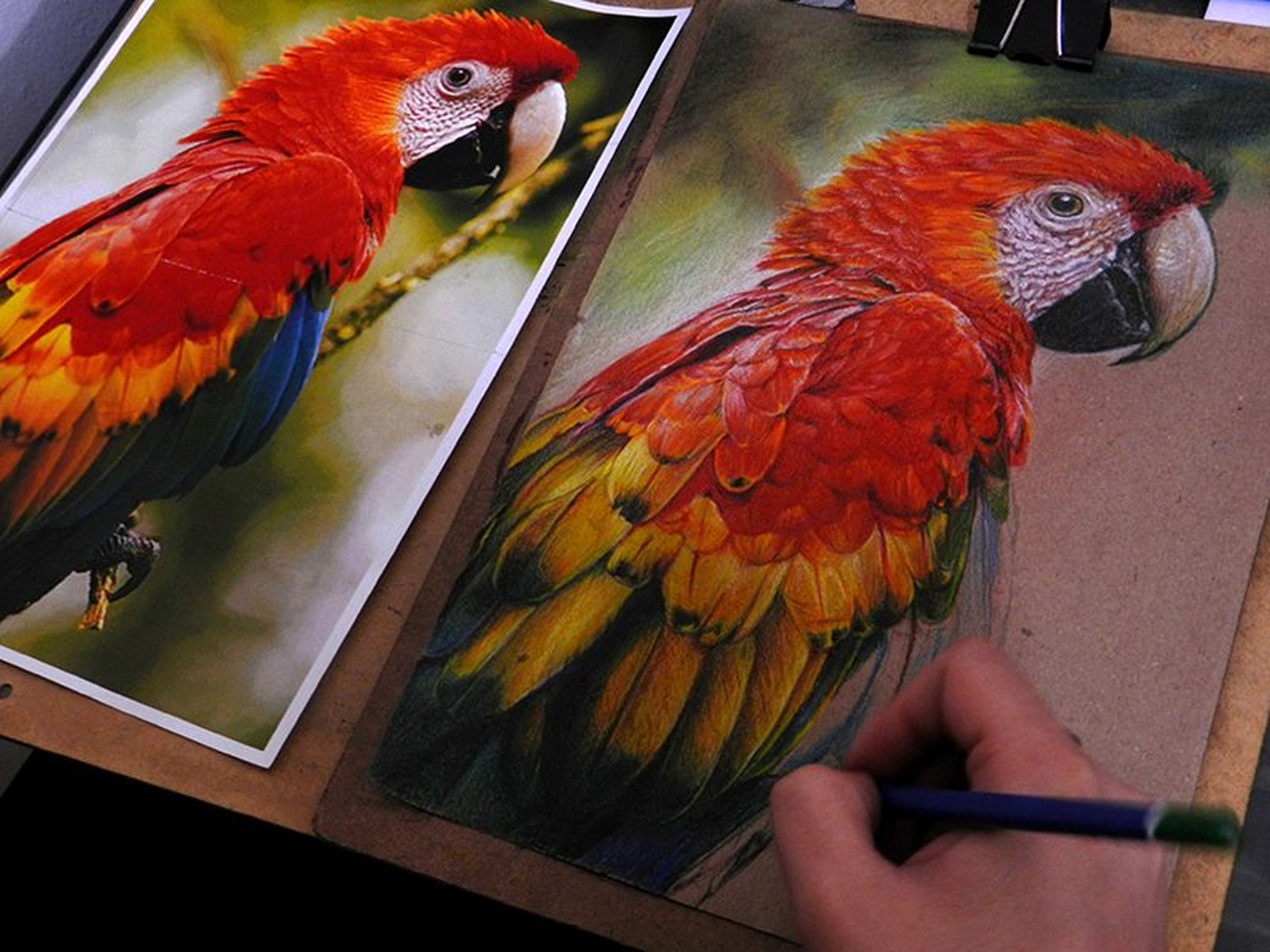 bird, animal themes, parrot, indoors, multi colored, animals in the wild, one animal, wildlife, perching, fish, orange color, beak, close-up, animals in captivity, macaw, animal representation, pigeon, birdcage, art and craft, side view