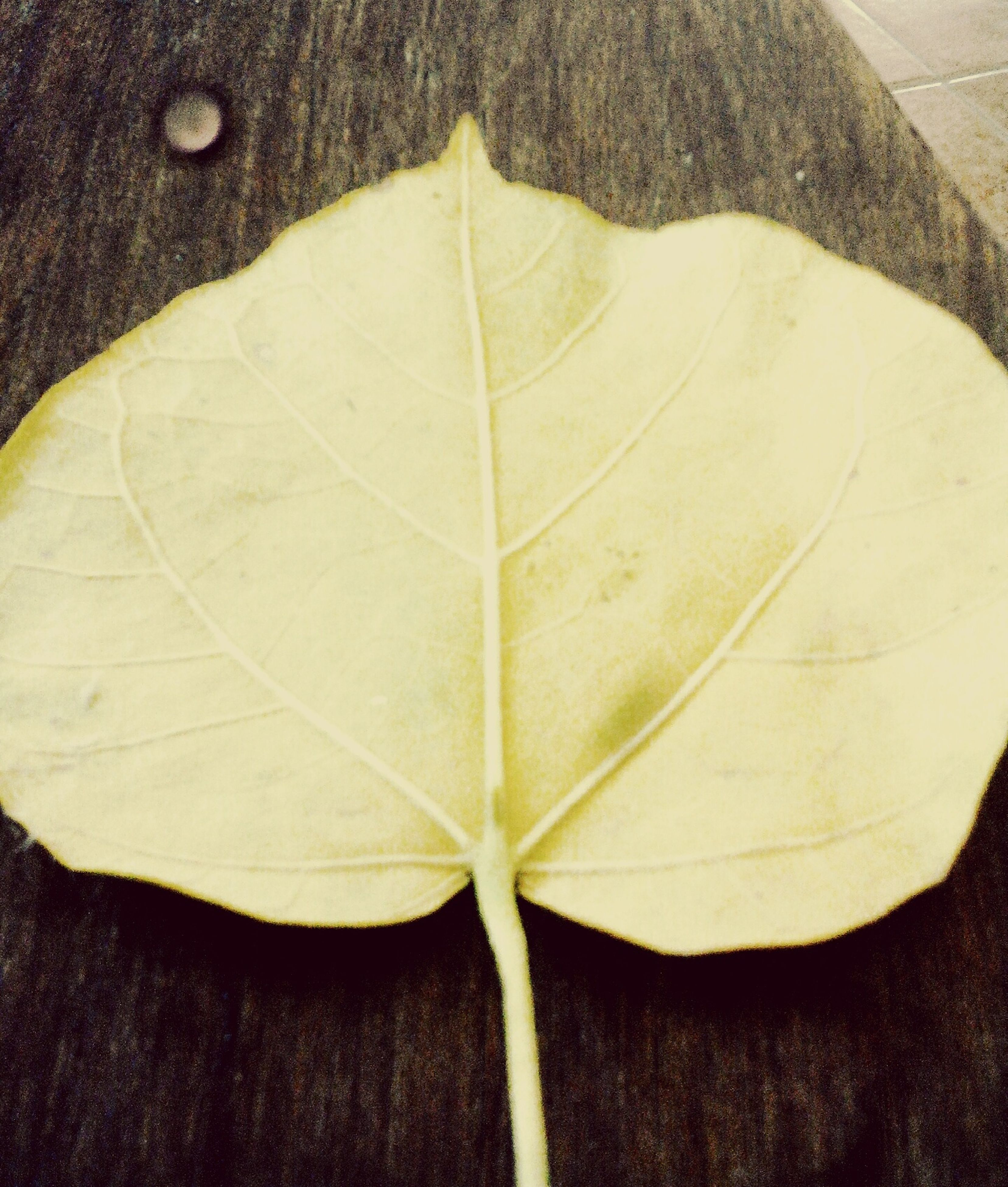 leaf, dry, season, close-up, leaf vein, yellow, nature, fragility, beauty in nature, tranquility, no people