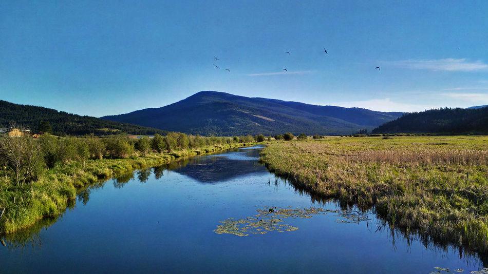 Blue Sky Blue Water Calm Water Fishing Flathead Flathead Valley Kila Montana River Sky Stream Water Water And Sky