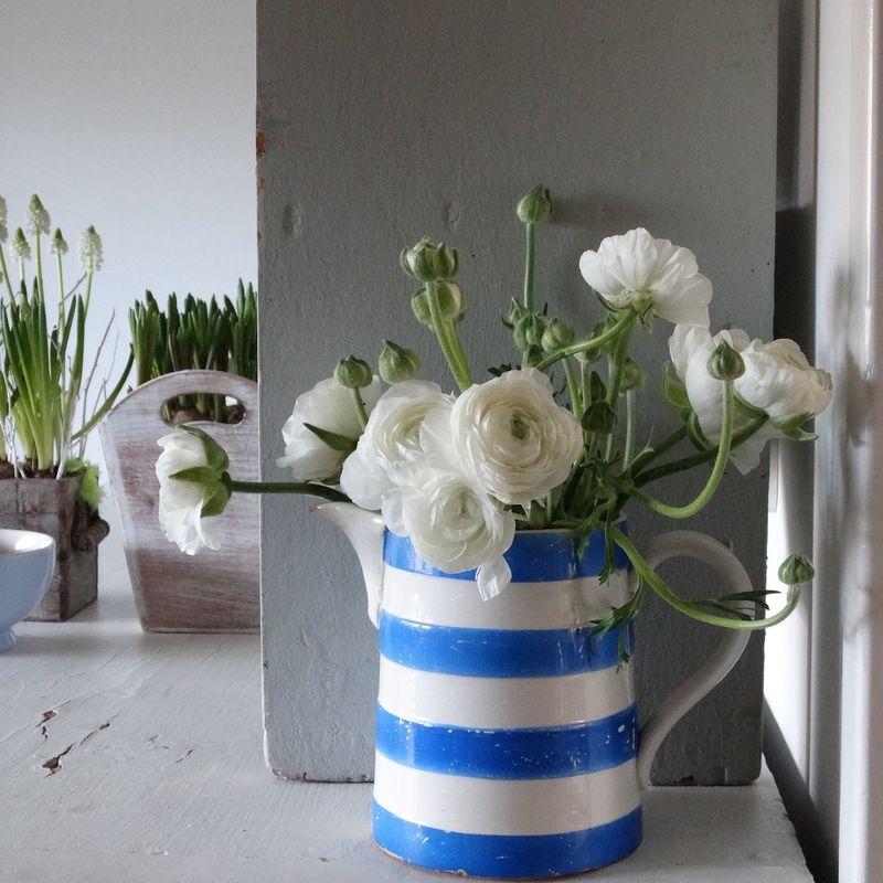 Ranonkels  Flowermarket Bloemenmarkt Springtime Botany
