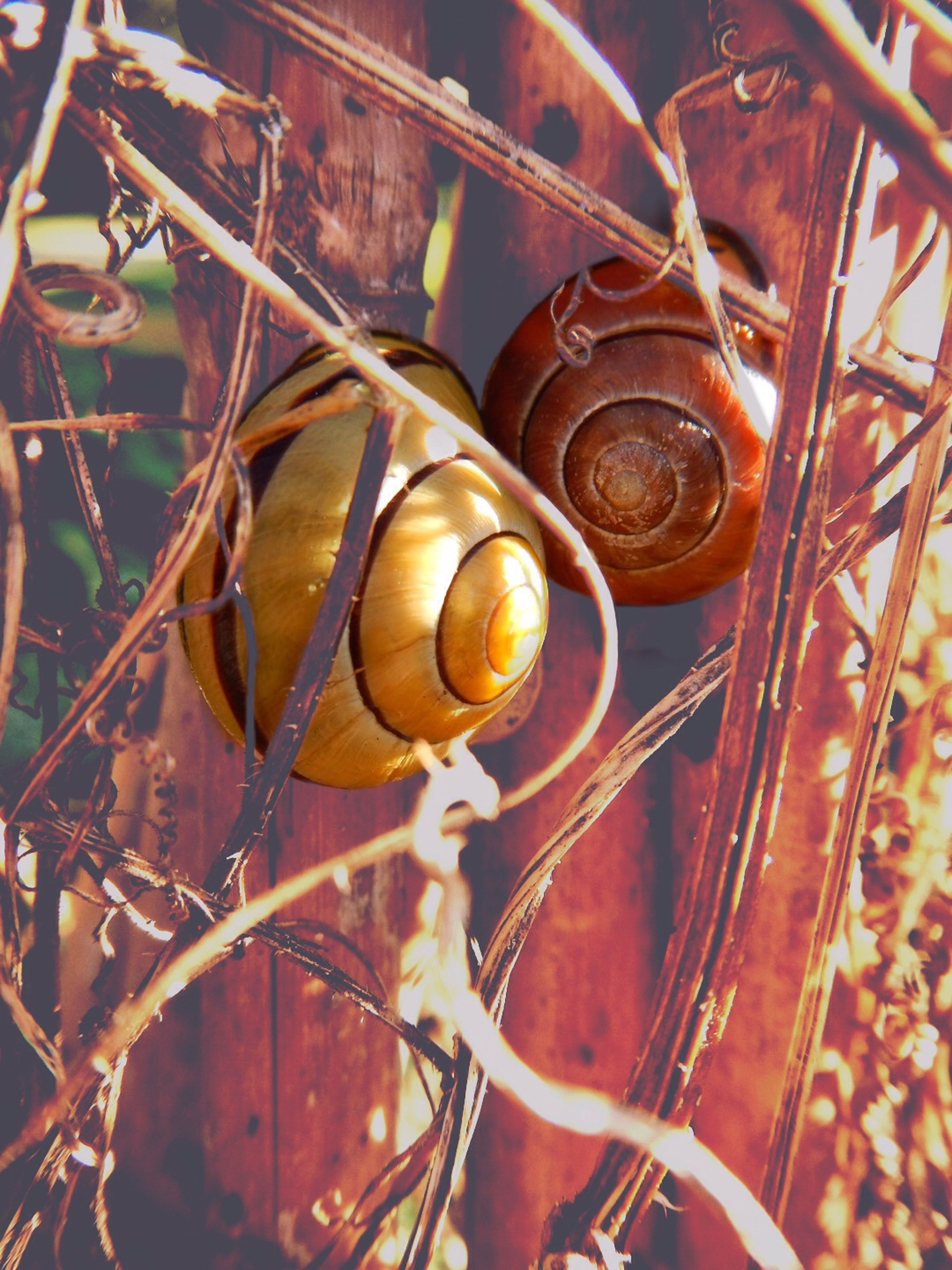 Close-Up Of Snails On Wooden Fence