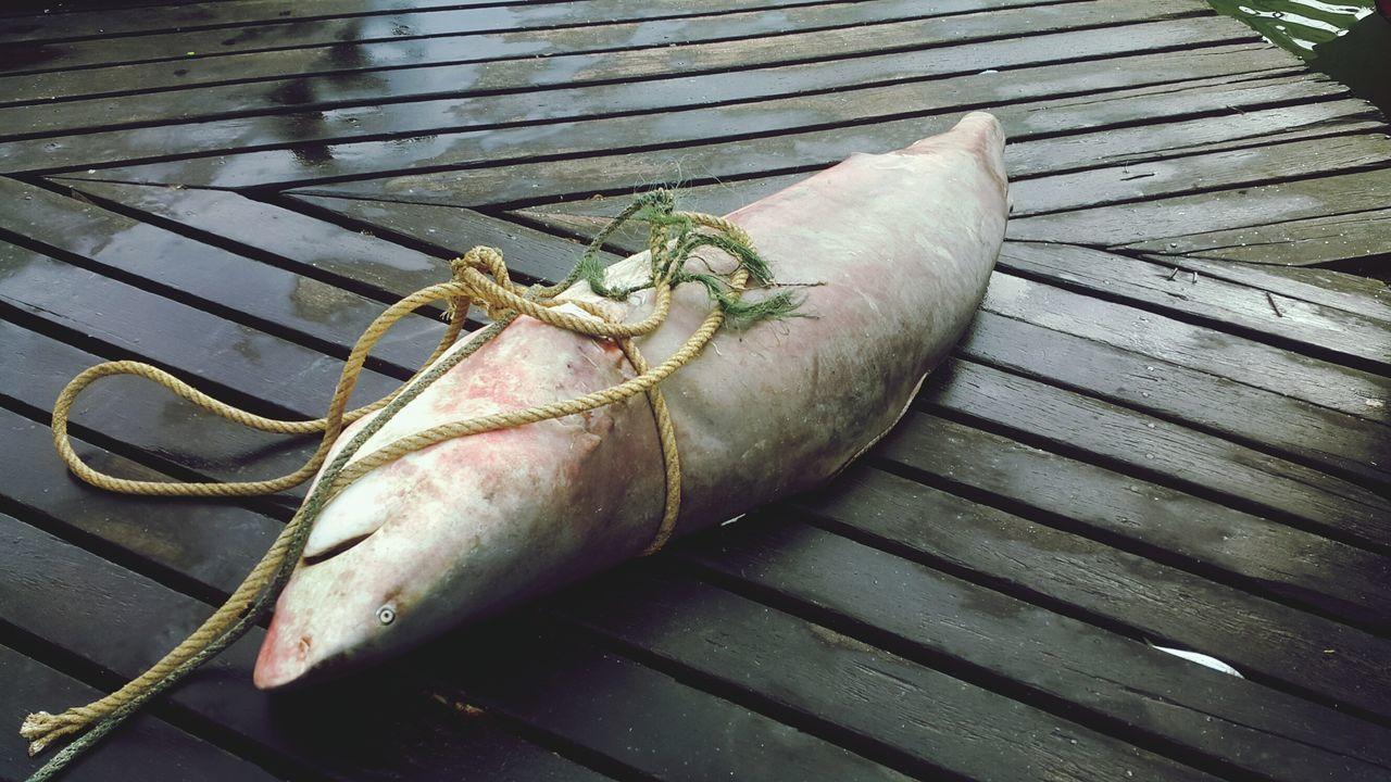 Seafood Seafood Fishing Industry Raw Food Sharks Fish Market Shark Sharkfin Sharkfinsoup