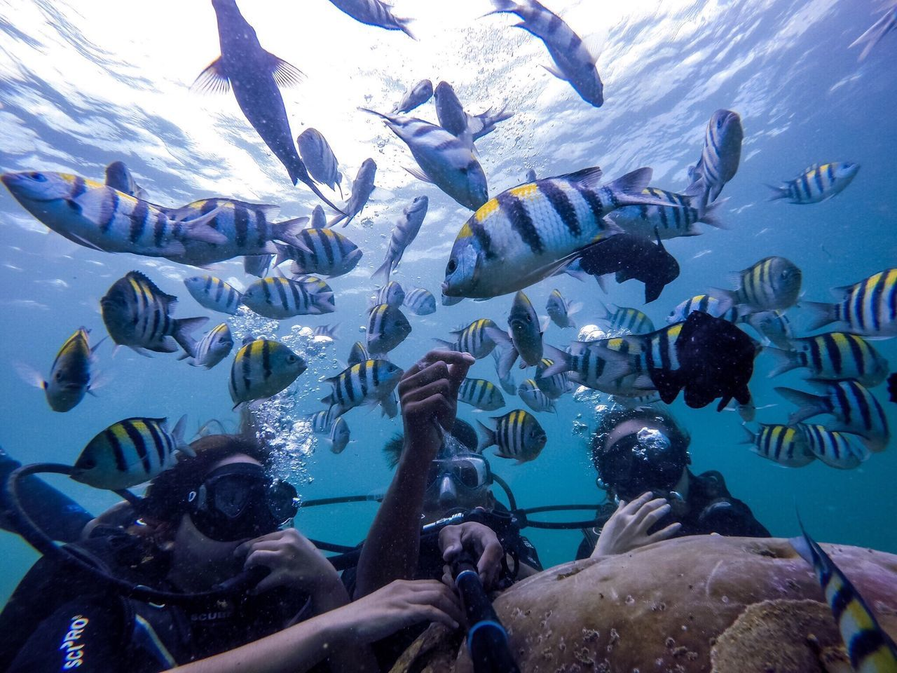 Beautiful stock photos of underwater, , Animal Themes, Beauty In Nature, Diving