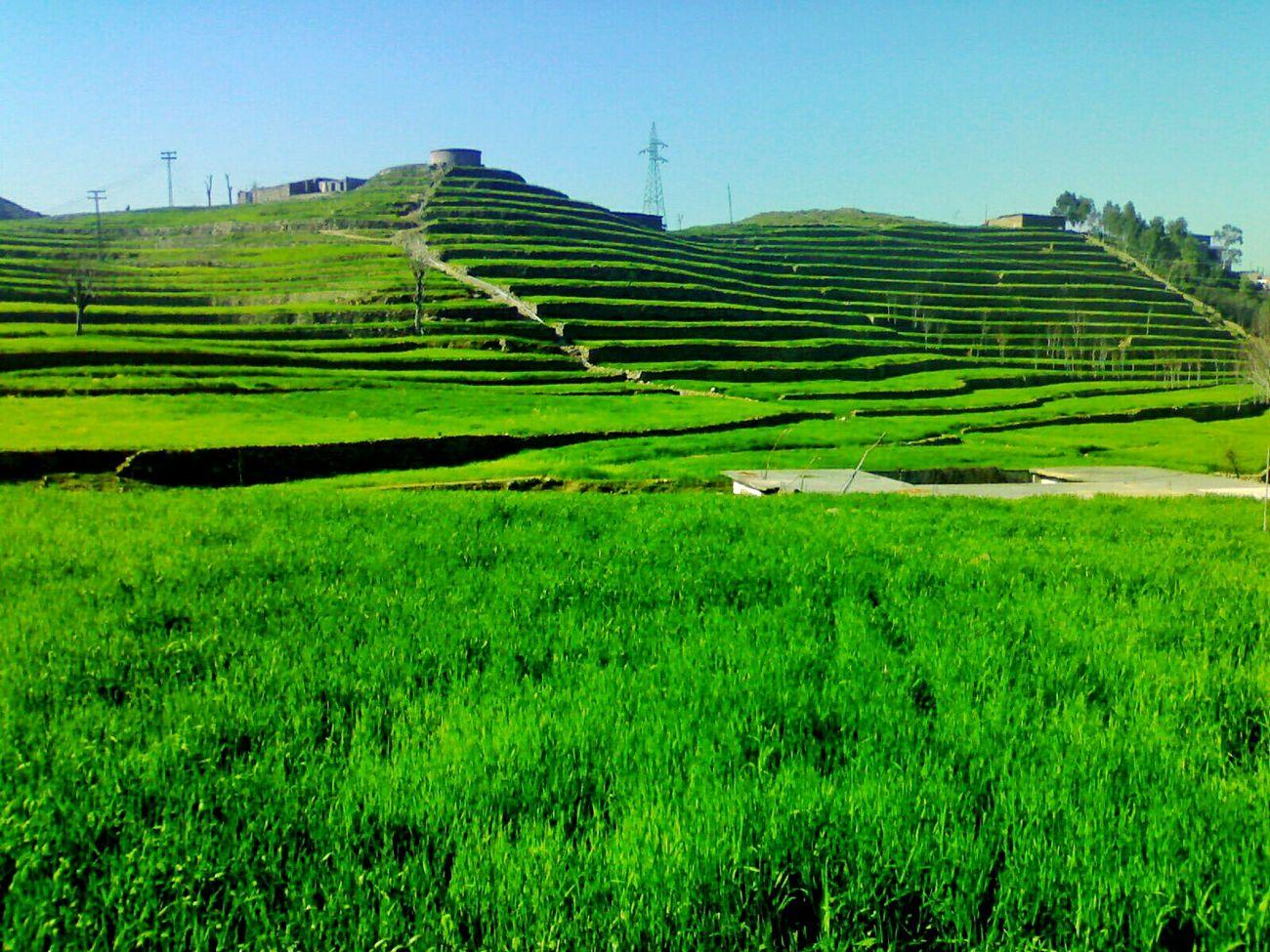 Timergara Dir KhyberPakhtoonkhawa Pakistan Fields Fieldscape Taking Photos Mountains Landscape_photography Landscapes