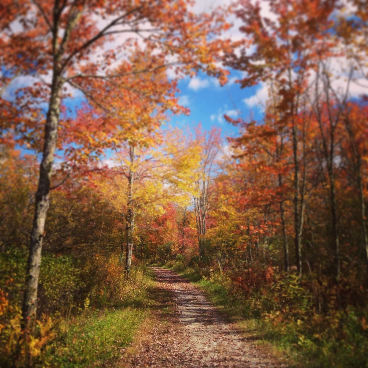 New England  Hiking Colors Of Autumn Path