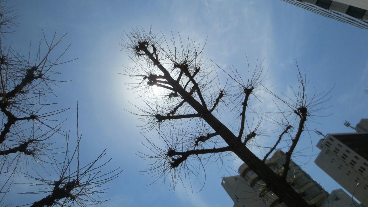 春の銀杏 Taking Photos Enjoying Life Tree Silhouette 散歩 Silhouette_collection Snapshot Silhouette シルエット部 Gingko Tree 銀杏