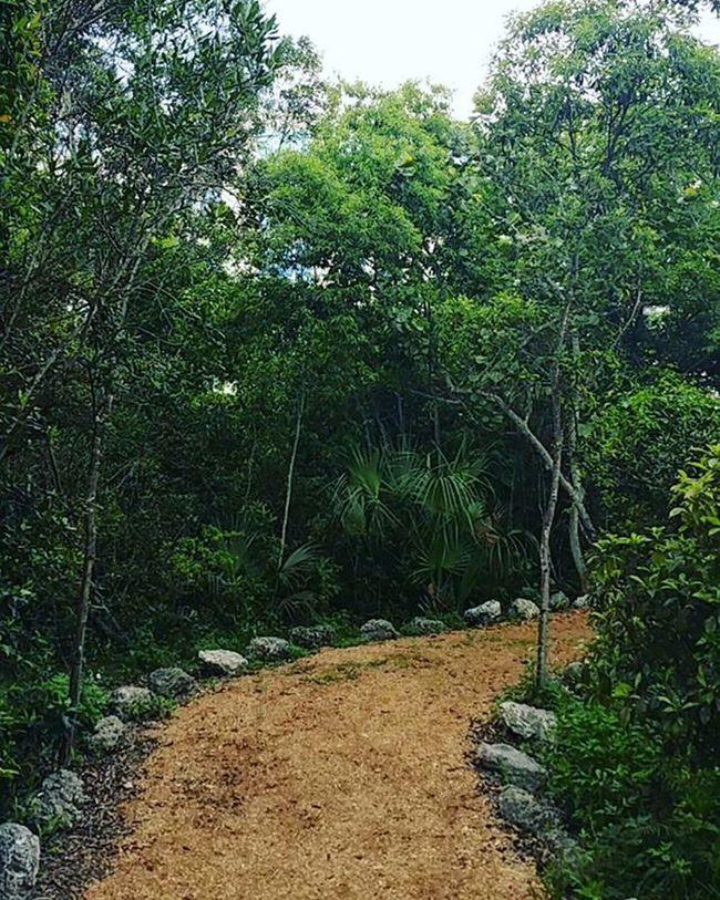 Trail FIU Fiunaturepreserve Nature