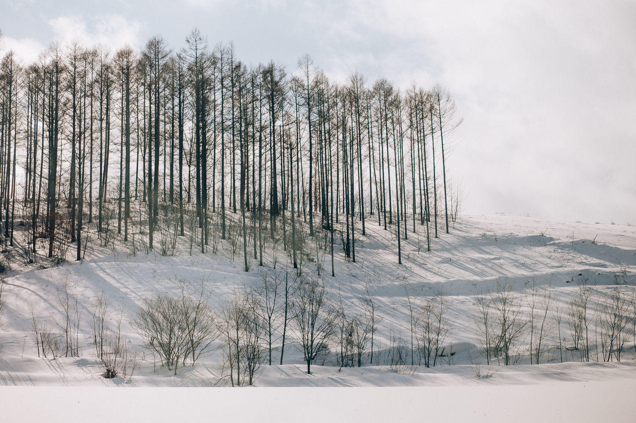 Beauty In Nature Cloud - Sky Cold Temperature Covering Forest Frozen Landscape Light And Shadow Nature No People Outdoors Scenics Shadow Sky Snow Sunlight Tranquil Scene Tranquility Tree Weather Winter
