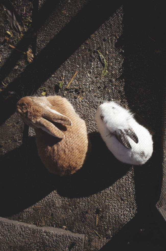 together together A Bird's Eye View Animal Themes Animals Bunnies Bunny  Ears Enjoying The Sun Everyday Joy Full Frame Fur Garden High Angle View Love Mammal Nature Shadow Shadowplay Shadows & Lights Sunlight Sunlight Together Togetherness Two Animals Urban Gardening View From Above