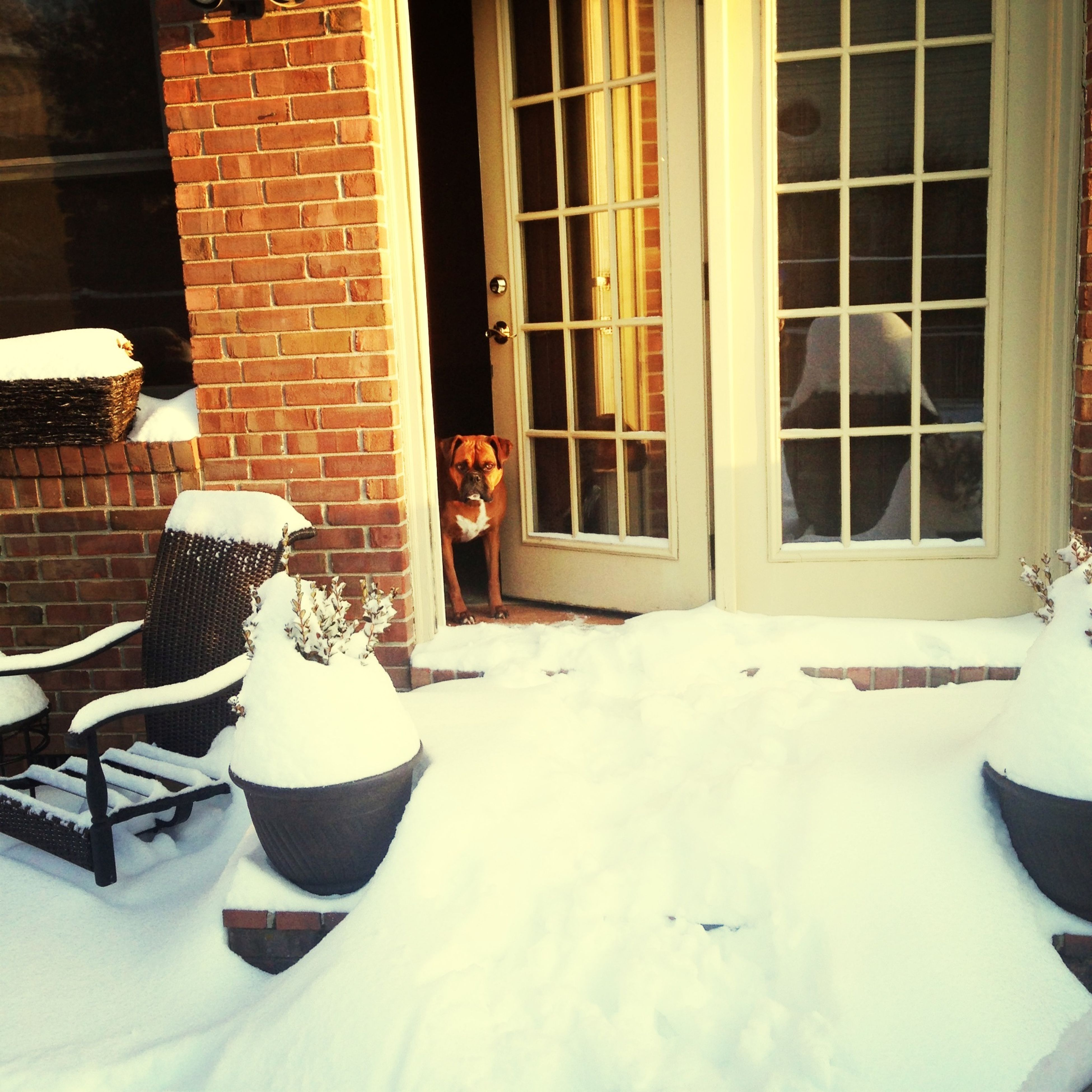 window, architecture, building exterior, built structure, house, chair, potted plant, residential structure, glass - material, day, covering, residential building, brick wall, snow, winter, building, cold temperature, no people, outdoors, sunlight