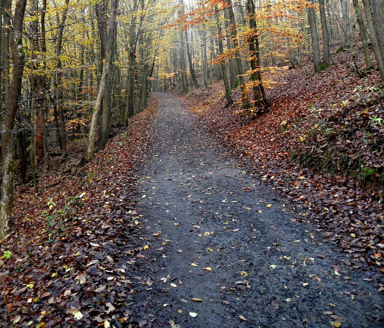 Autumn Bükk Footpath Forest Nature Outdoors Tree Trees Way First Eyeem Photo