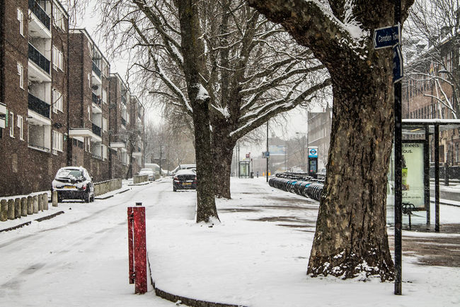 Silence In The White Architecture Bare Tree Camden Town City Cold Cold Temperature Cold Weather Empty London Nature No People Outdoors Season  Snow Snow Covered Snow ❄ Snowing Street Photography Streetphotography Tree Tree Trunk Weather White Blanket Winter Colour Of Life