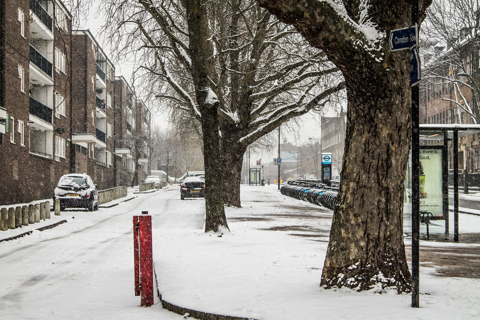 Silence In The White Architecture Bare Tree Camden Town City Cold Cold Temperature Cold Weather Empty London Nature No People Outdoors Season  Snow Snow Covered Snow ❄ Snowing Street Photography Streetphotography Tree Tree Trunk Weather White Blanket Winter London Lifestyle Adapted To The City