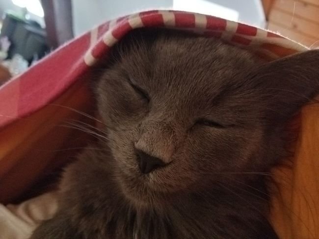 Animals Babycat🐱 Katzen<3 Meine Katzen Katzen 💜 Babycats Babycat ❤ Katzenliebe Katze Cat♡ Katzen Playing With The Animals Katzenfoto Cute Pets Cat
