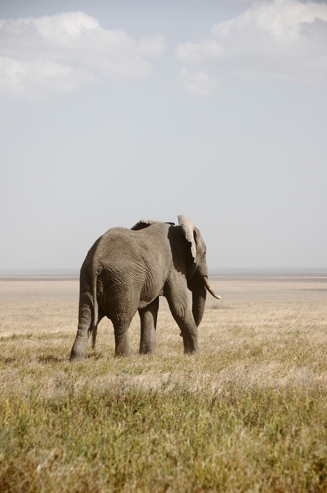 Beautiful stock photos of elephant, Animal Themes, Animals In The Wild, Beauty In Nature, Day