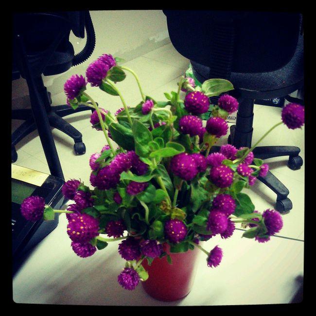 Flowers make me feel better <3