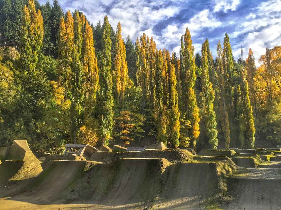 Cloudy Skies Bike Park Angles Yellow Autumn Leaves Autumn Autumn Colors Fall Colors Fall Beauty Fall Fall Leaves Angles And Lines Poplars Poplar Tree Beautiful Queenstown New Zealand