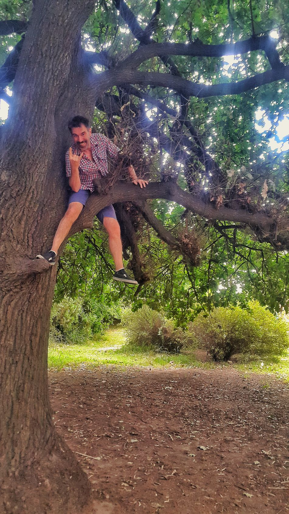 Climbing a tree part 4 Healthy Lifestyle Healthy Peoplephotography People Photography People Street Photo Streetphotography Buenos Aires, Argentina  Street Photography Climbing A Tree Climbing Climbing Trees EyeEm Buenos Aires Healthy People  Healthylife
