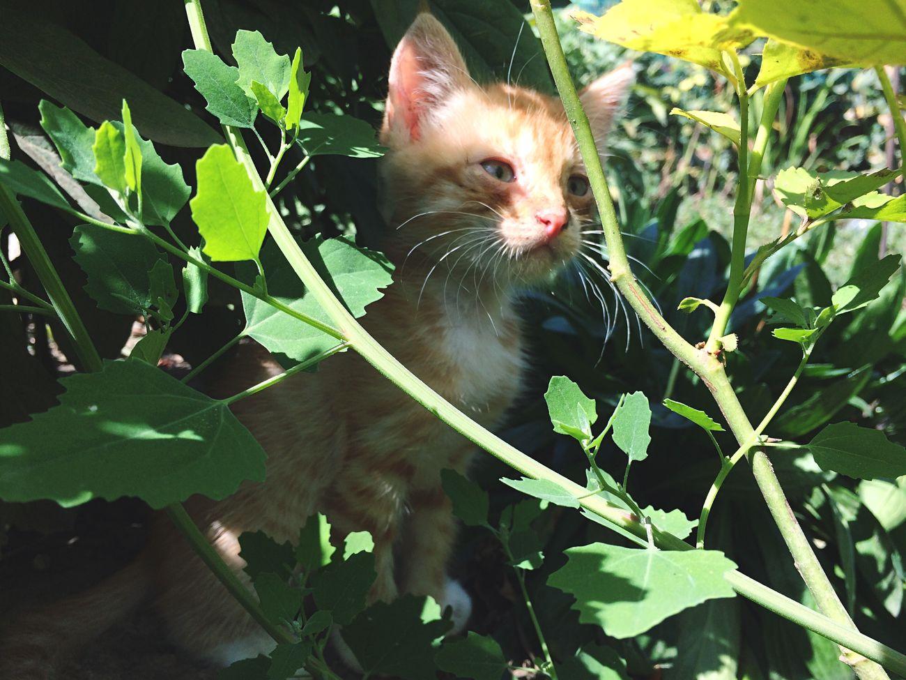 Рыжий кот ✨ First Eyeem Photo