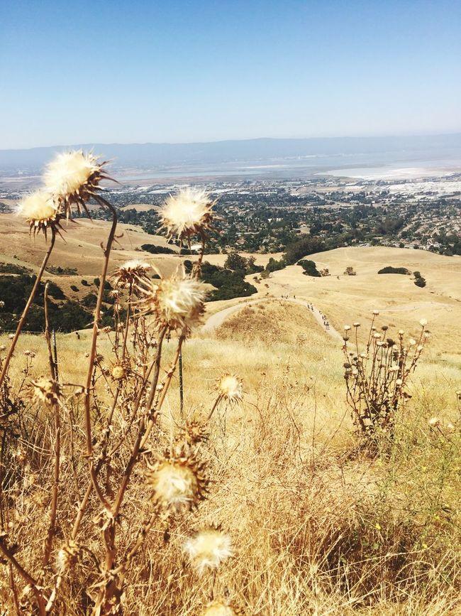 Hikingadventures Hiking Trail Desert Exercise Desertflowers