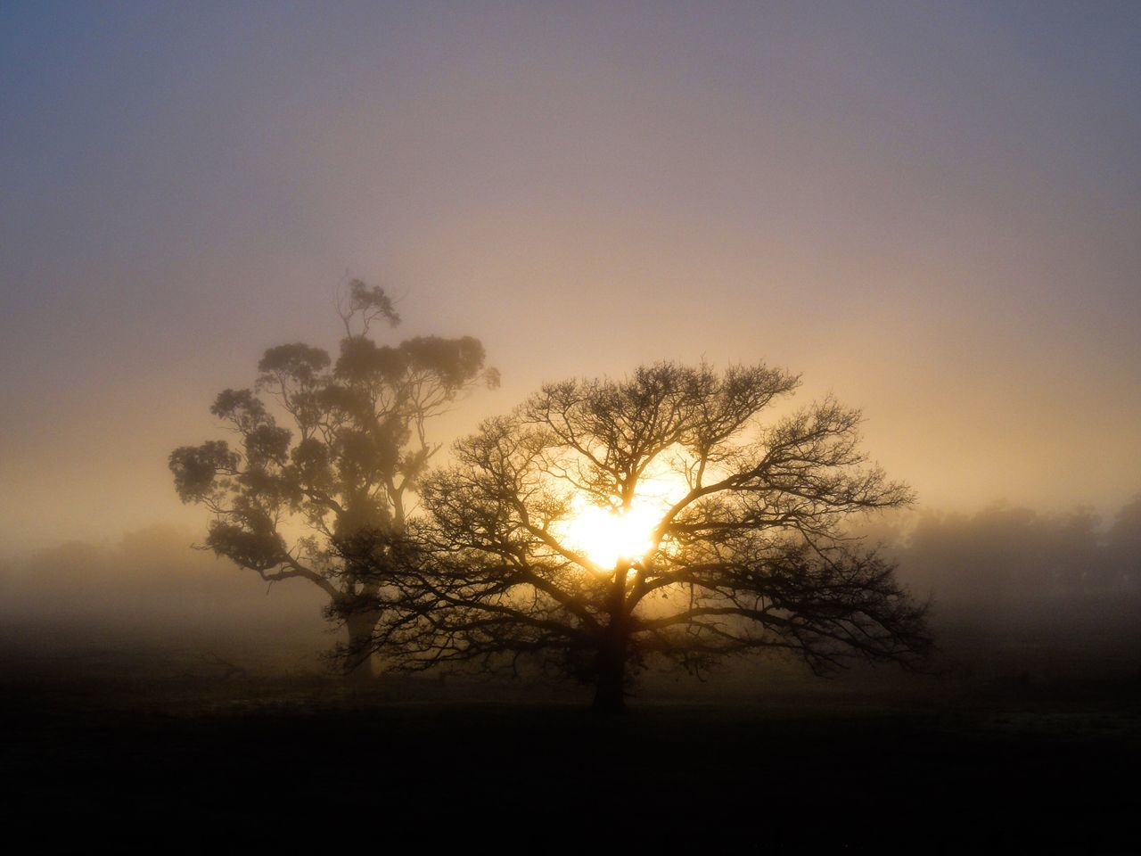 sunset, sun, nature, tree, tranquil scene, beauty in nature, tranquility, sunbeam, scenics, sunlight, silhouette, clear sky, landscape, idyllic, outdoors, no people, field, sky, lone, hazy, branch, day