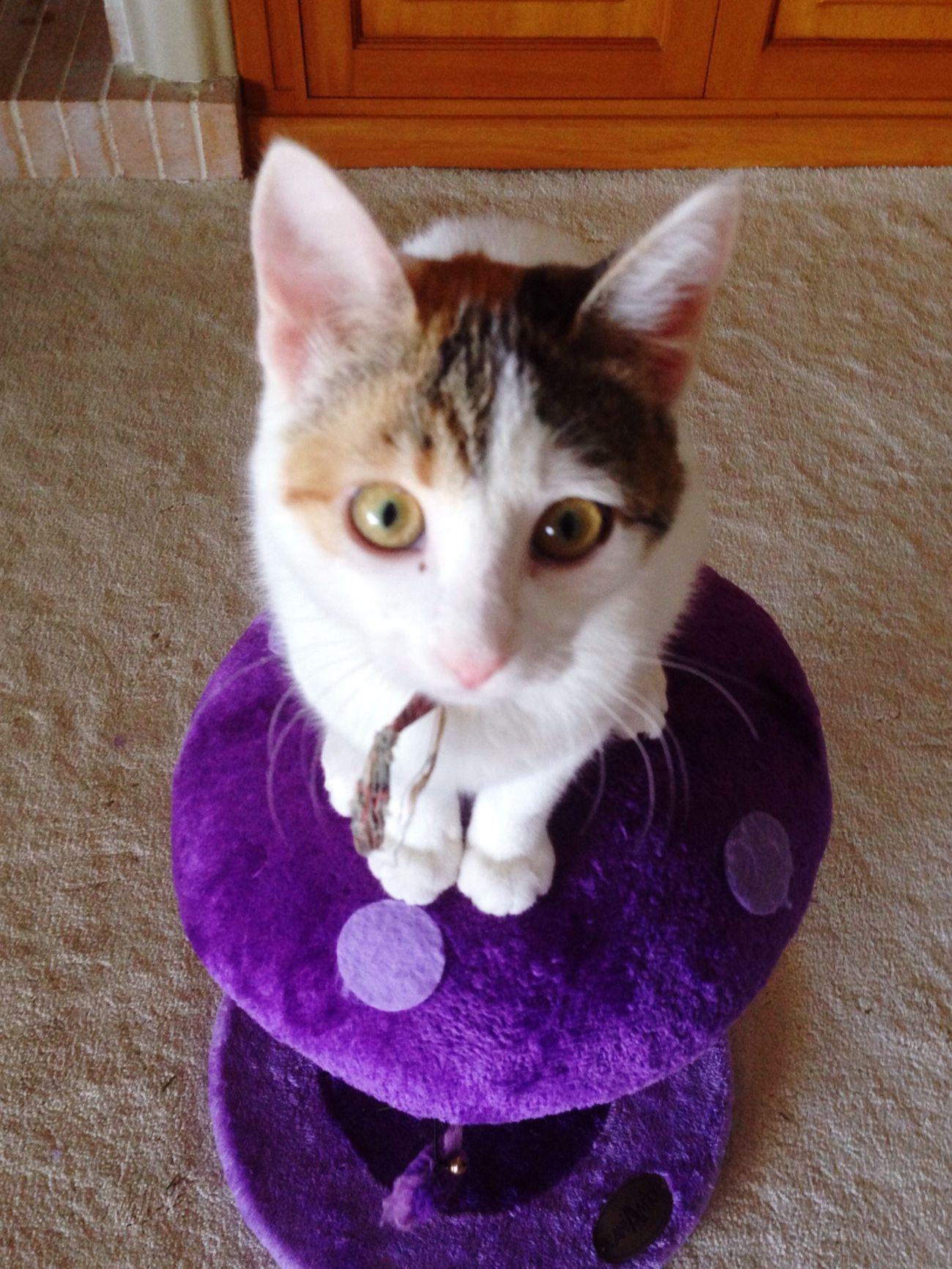Fugitive Cats Cute Cats Cats Of EyeEm