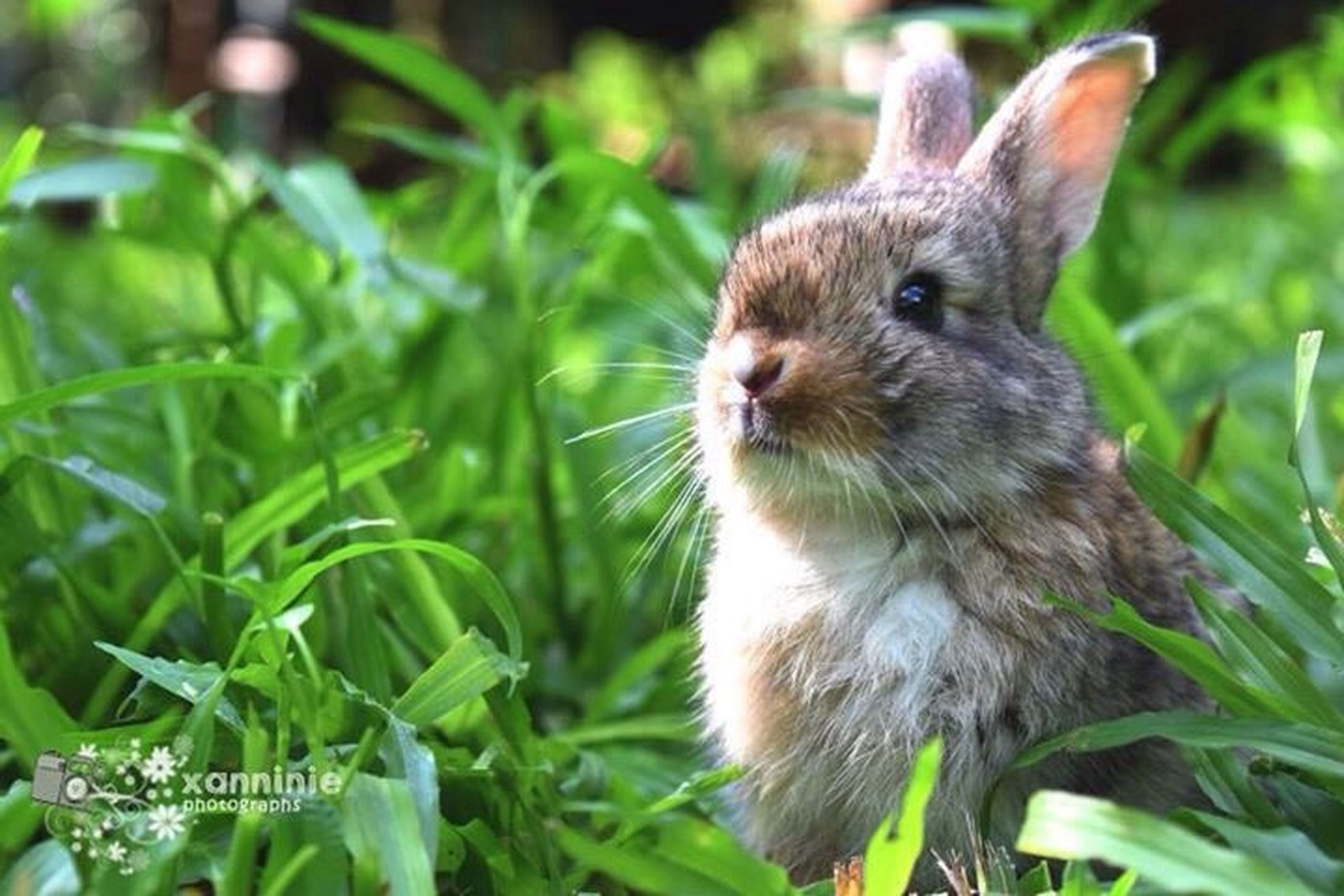 animal themes, one animal, animals in the wild, wildlife, focus on foreground, close-up, nature, green color, plant, looking away, leaf, day, mammal, bird, squirrel, grass, outdoors, growth, side view, selective focus