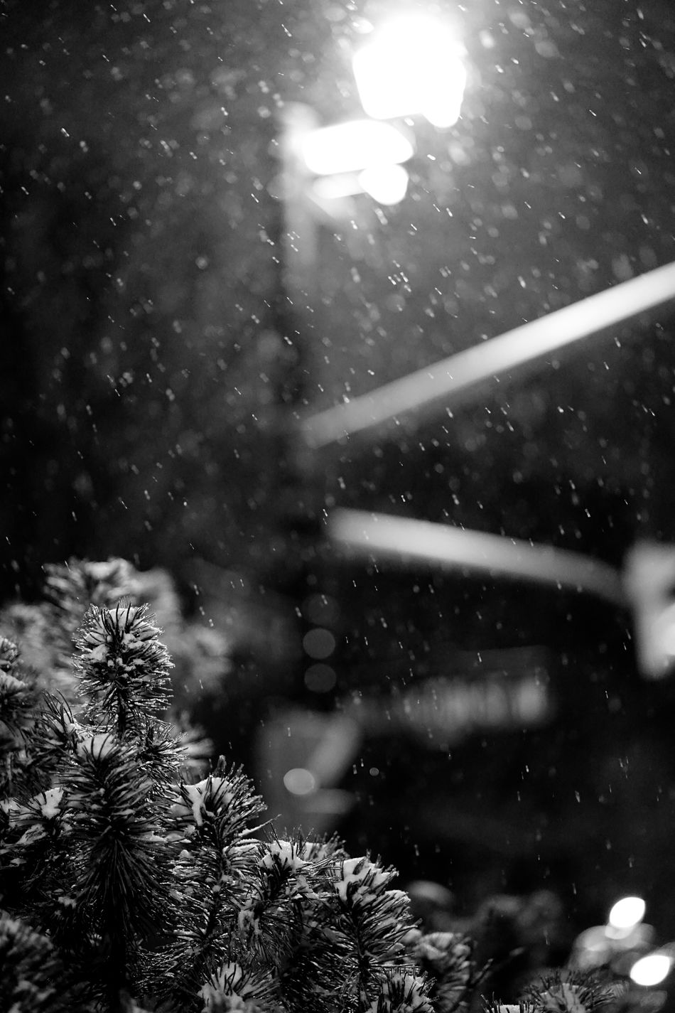 snowy night in Canada Black And White Black And White Photography Cold Down Downtown Frigid Lights Monochrome No People Outdoors Sing Snow Tree