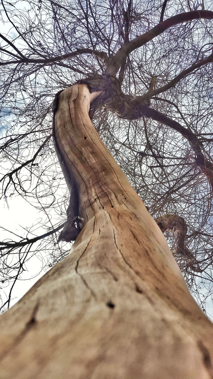 tree, tree trunk, bare tree, branch, dead plant, wood - material, dead tree, nature, day, low angle view, outdoors, bark, no people, beauty in nature, sky, close-up