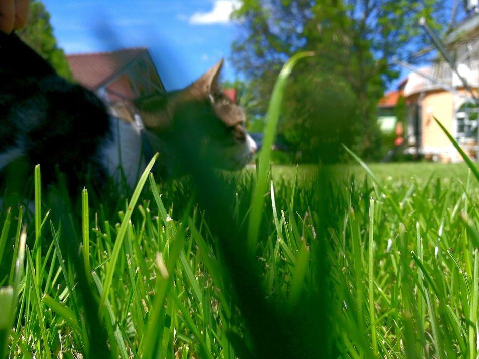 Cat Cats Cat Lovers Catoftheday Cats Of EyeEm Hunt Hunting Hunter Cathunter