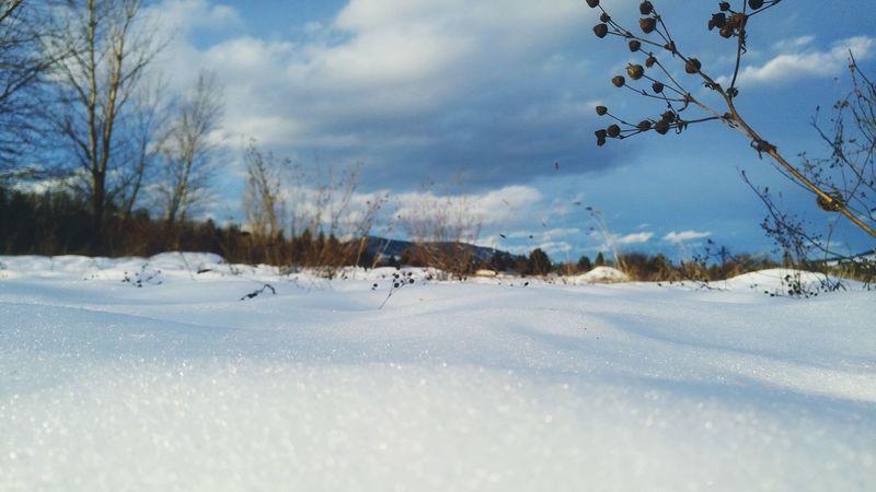 Okanagan Winter Sky Snow Macro Lake County, Ca Kelowna,BC Imagesofcanada