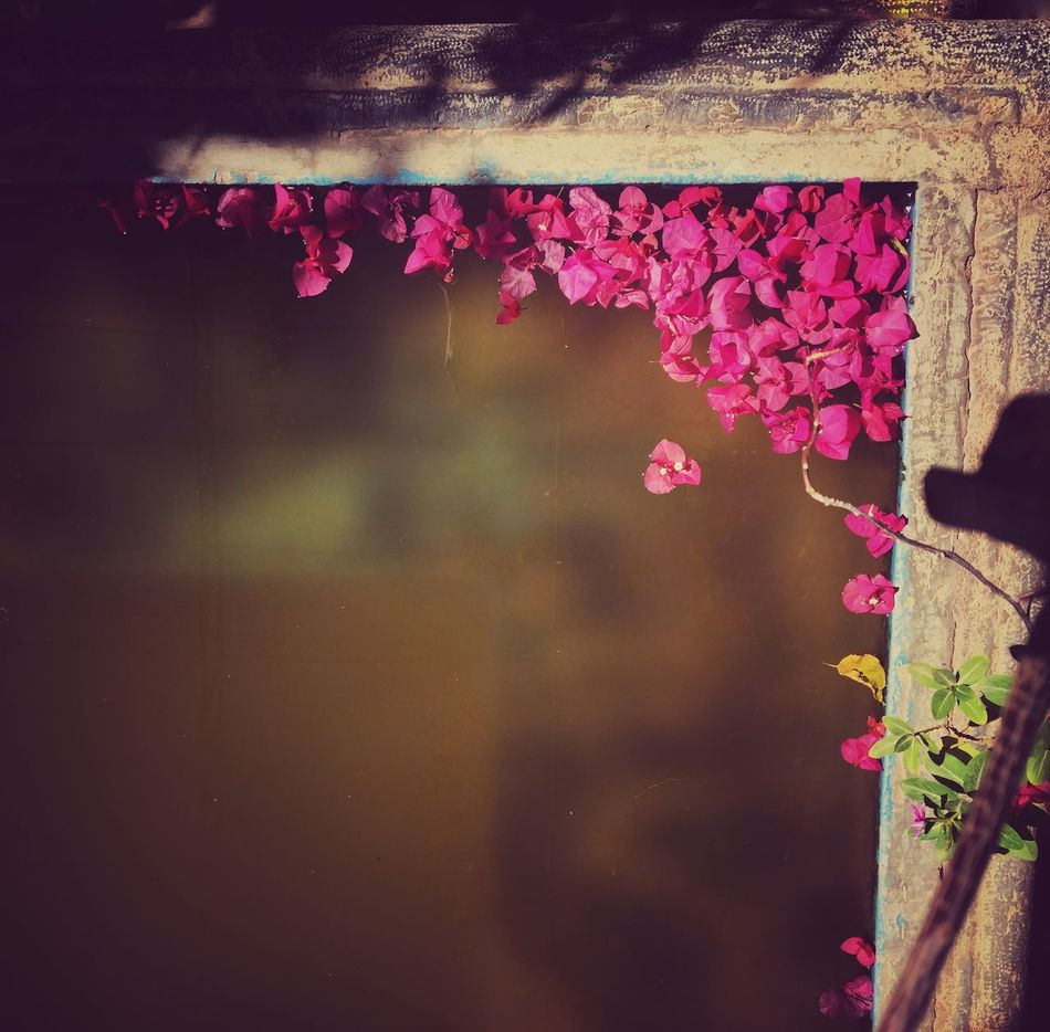 Yazd Garden