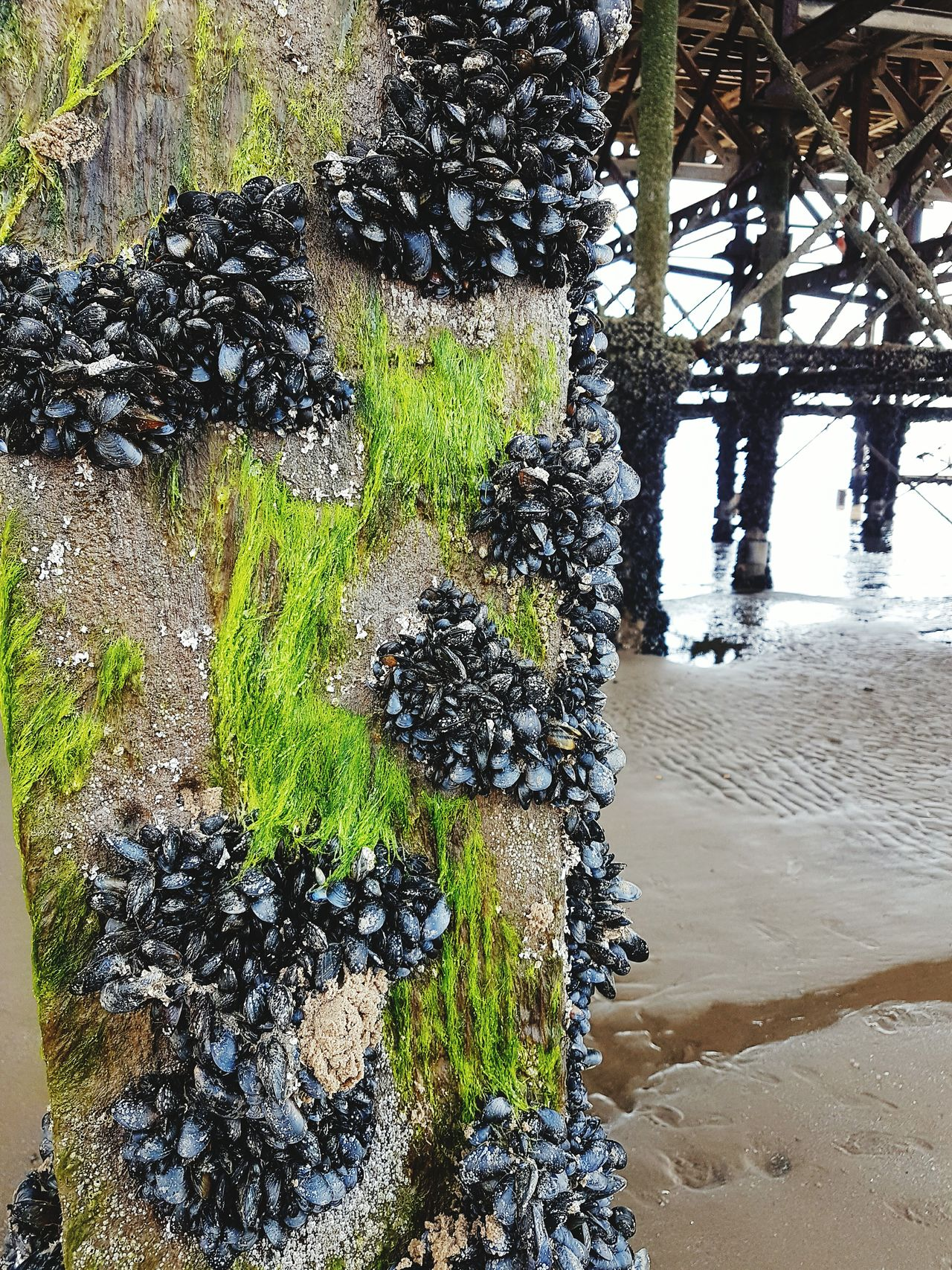 Shells Muscles Sea Water Seaweed Molo Pillars Pillars In The Water
