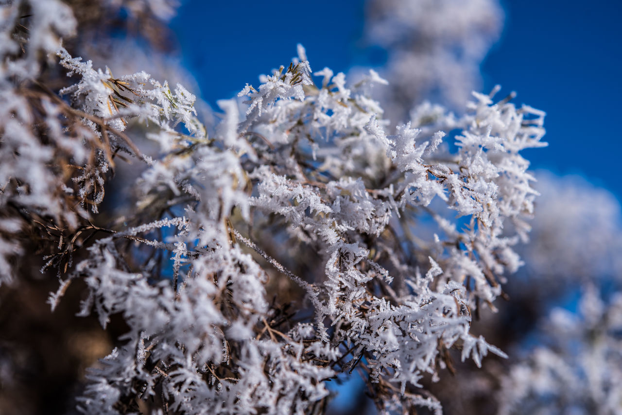 Beauty In Nature Blue Close-up Cold Temperature Day Frost Hoar Frost Nature No People Outdoors Rime Sky Snow Tree White Frost Winter