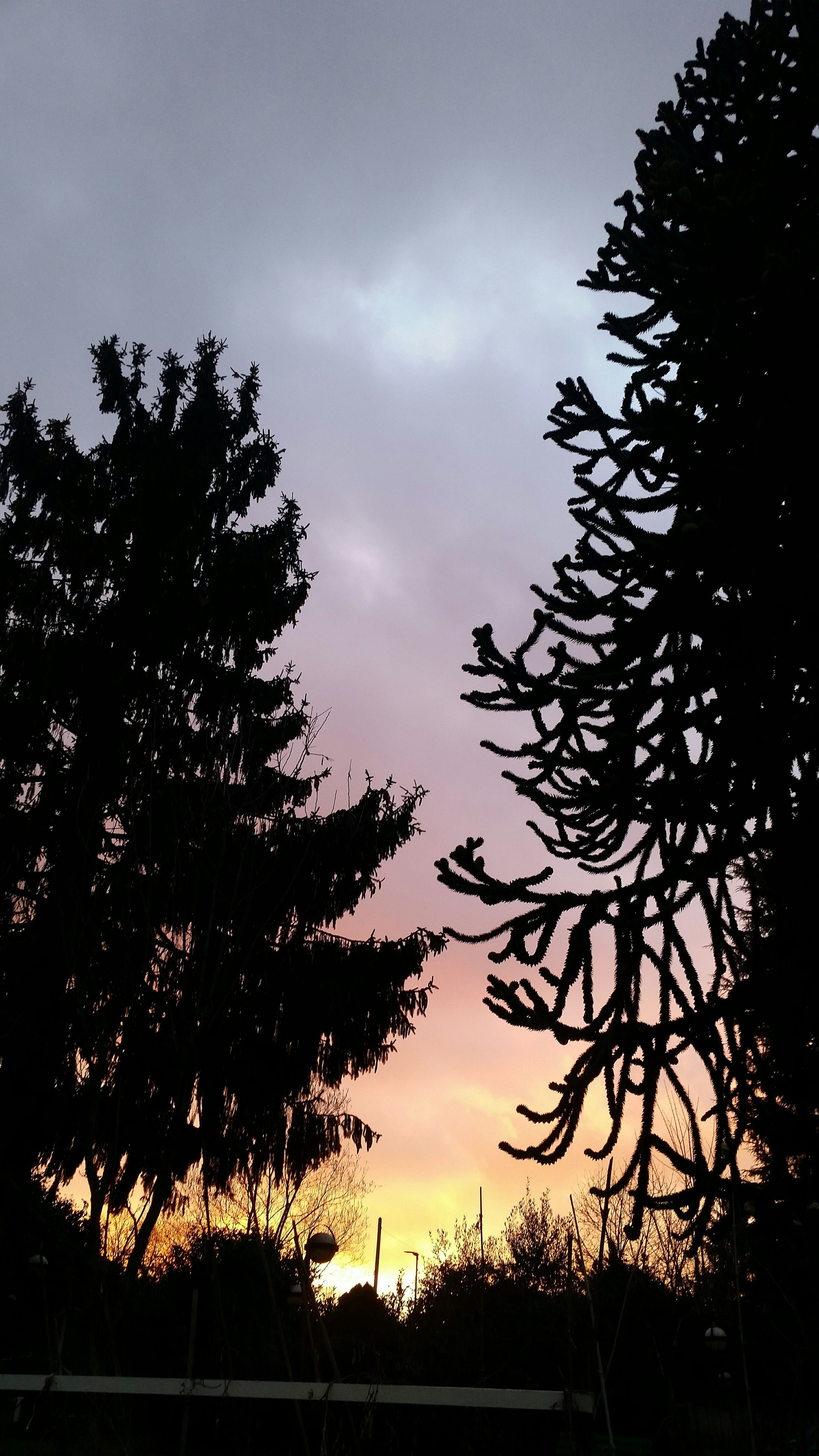 silhouette, tree, sky, sunset, tranquility, beauty in nature, tranquil scene, cloud - sky, scenics, low angle view, nature, branch, growth, cloud, dusk, cloudy, idyllic, outline, outdoors, dark
