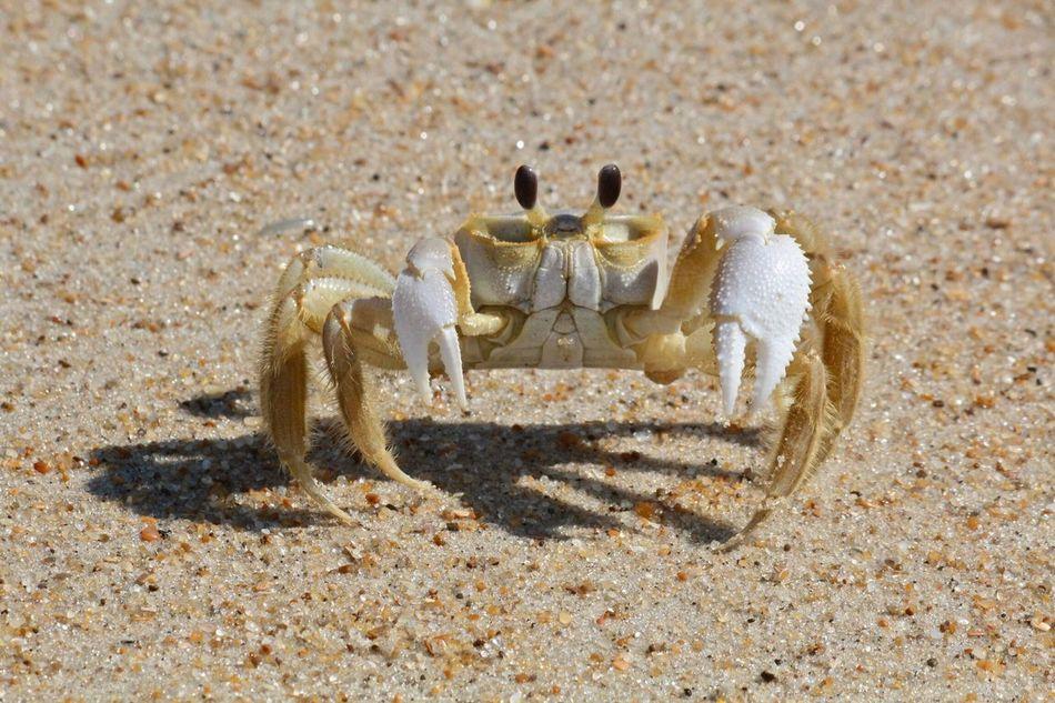 Beautiful stock photos of sand, Close Up, Crab, Day, Full Length