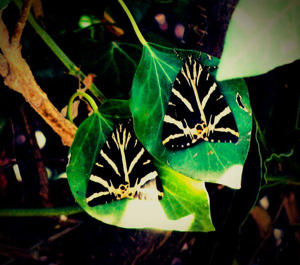 Capture The Moment Butterflies Leaves Flowers And Insects Insects  No People Greenery Nature Plants Butterflyvalley Beauty In Nature Close-up Macro Beauty Paros Island Summer Memories 🌄
