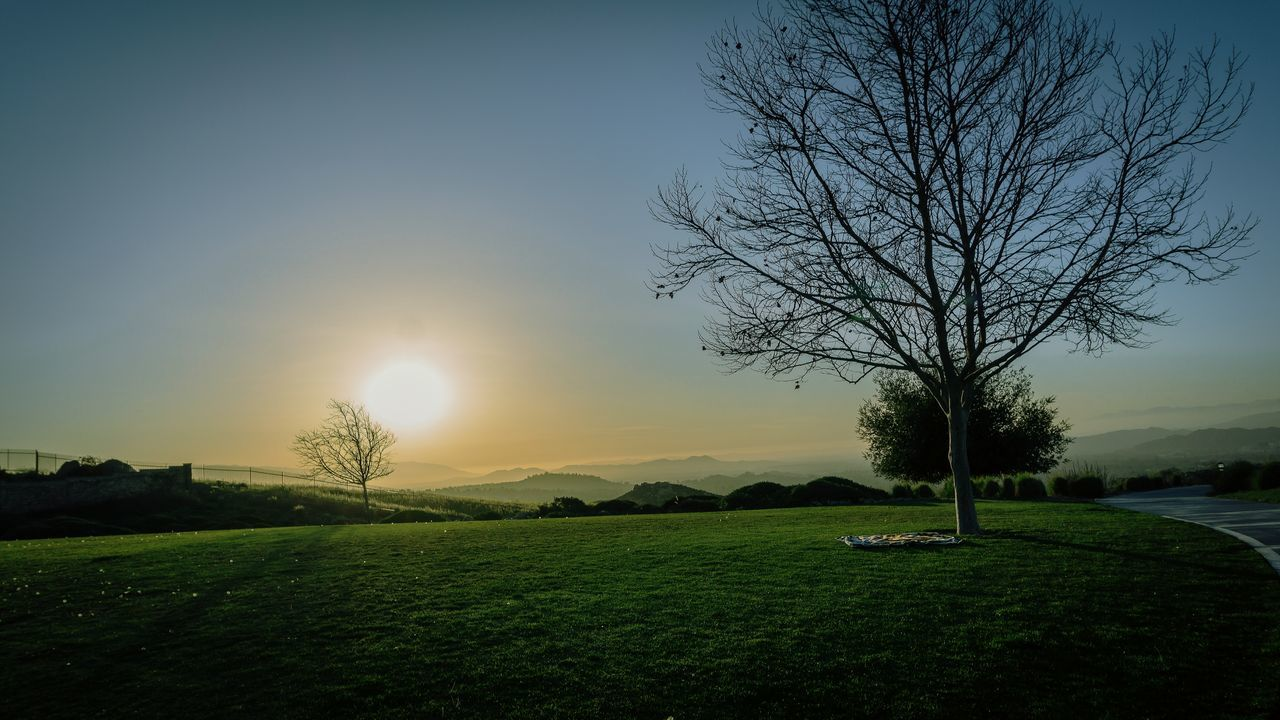 Tree Beauty In Nature Sunset Grass Outdoors Sky Day Photography Nature AdobeLightroom No People Sony A6000 Sycamore State Park Alone Sycamore Park