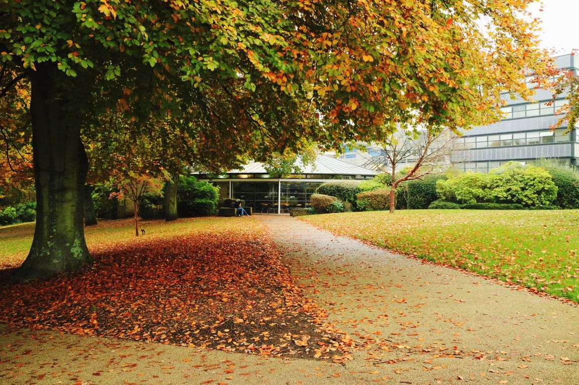 Taking Photos Tree Southampton At The Univercity Autumn Leaves Yellow Canon Cos M3
