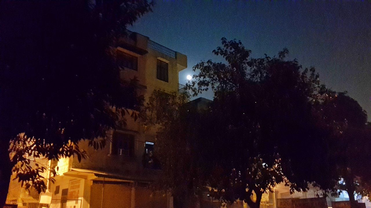 tree, illuminated, night, building exterior, architecture, no people, low angle view, built structure, outdoors, sky, branch, clear sky