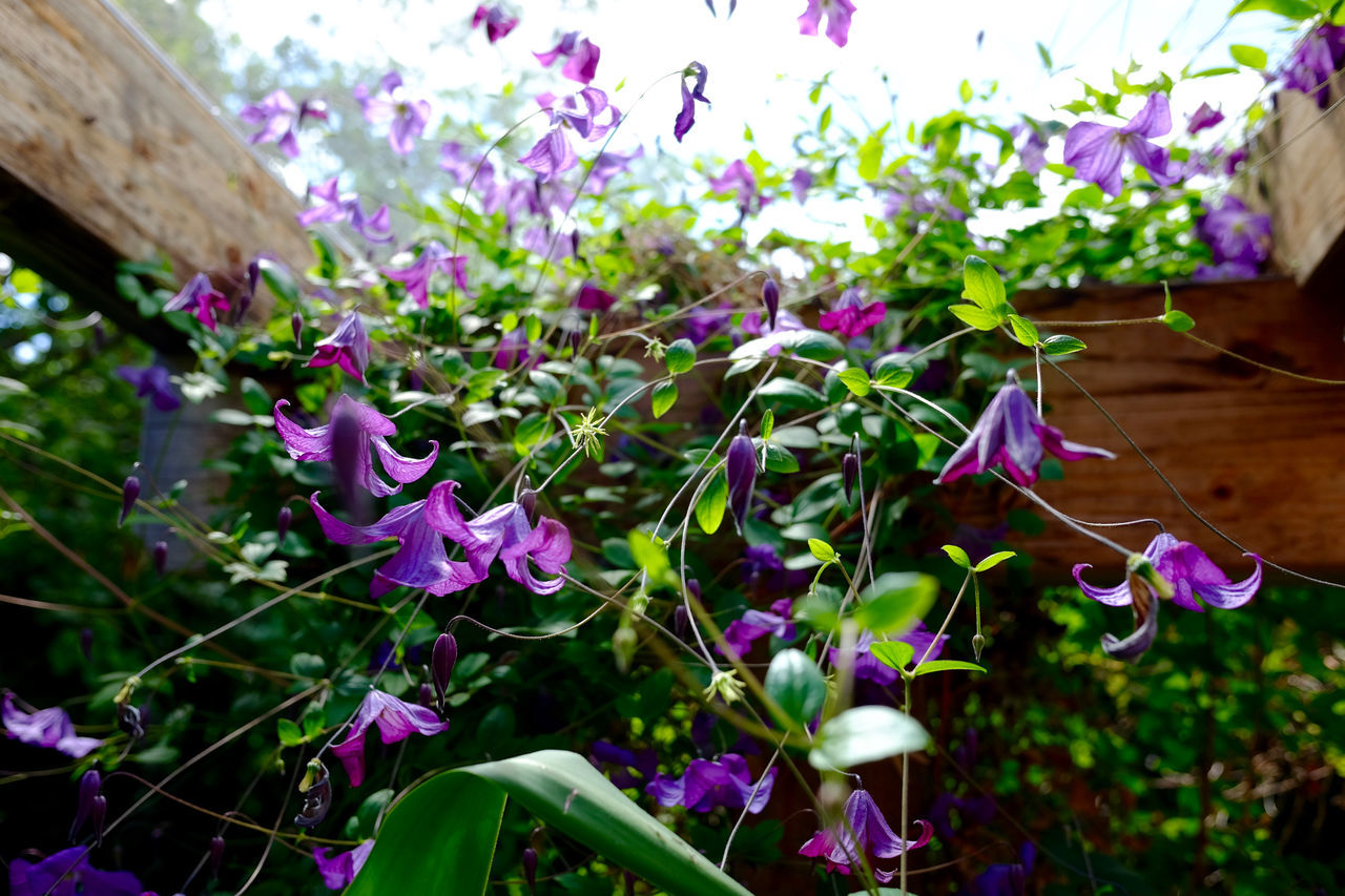 Beauty In Nature Blooming Close-up Flower Fragility Freshness Growth In My Garden Purple