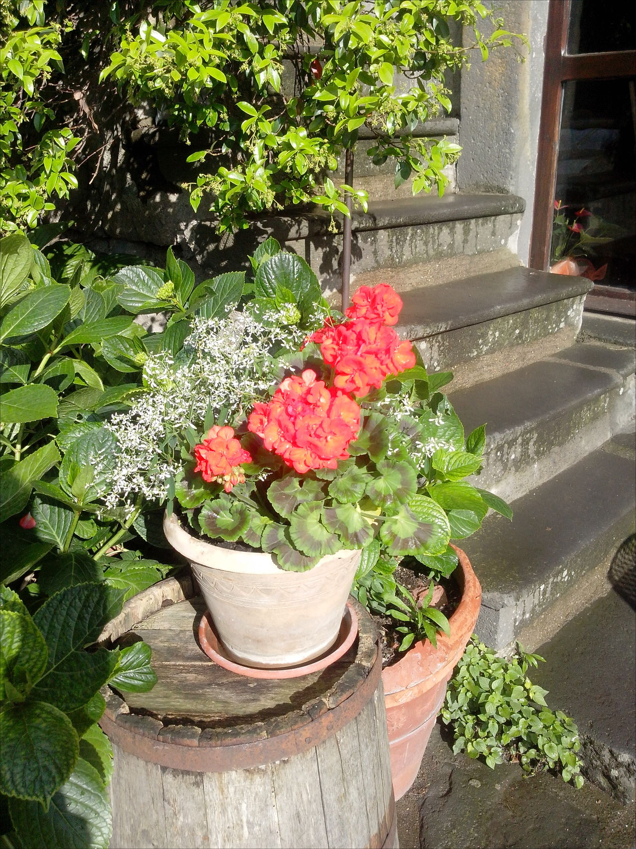 Blooming Blossom Civita Di Bagnoregio Close-up Flower Flower Pot Freshness Front Or Back Yard Growth In Bloom Petal Plant Potted Plant Stairway The City That Is Dying Tuff Tufo World Monuments Fund