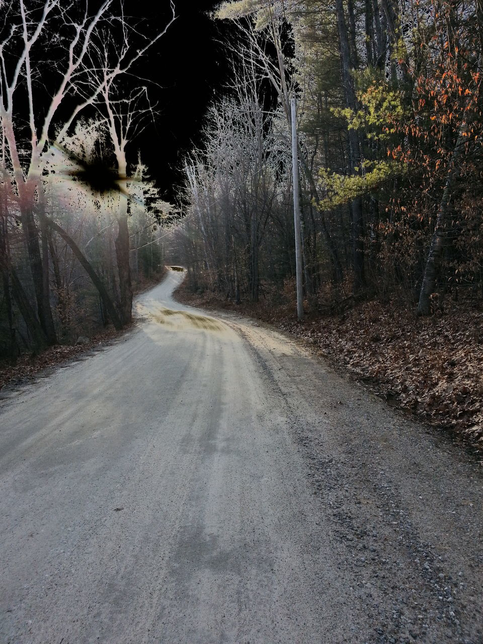 Dirt Road Amidst Bare Trees In Forest