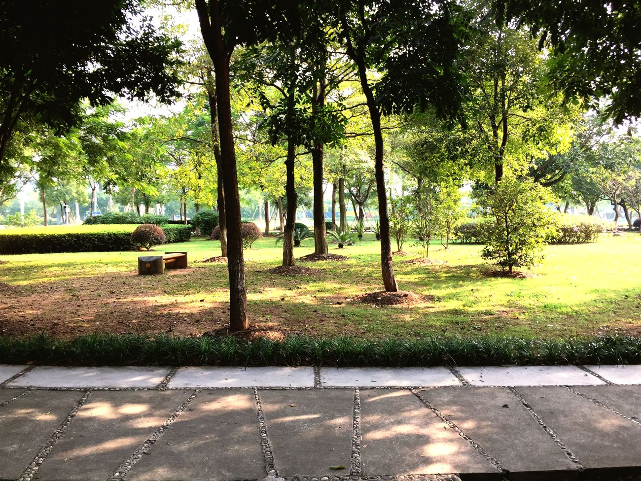 Taking Photos Light And Shadow Enjoying The Sun My College Getting Inspired 每次经过都能感到心灵的宁静🍃