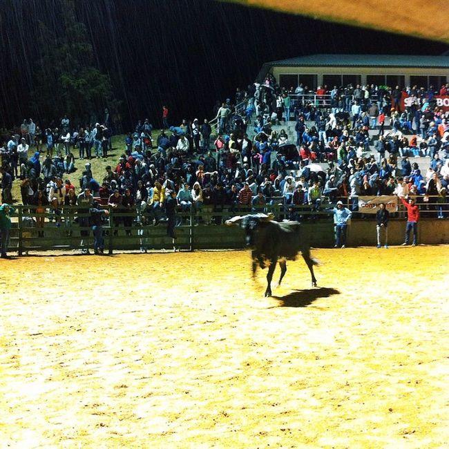 Pós santos na companhia dos touros Feiradaagricultura Santarém Ribatexas Touros Patilhas Bigodes Fernando